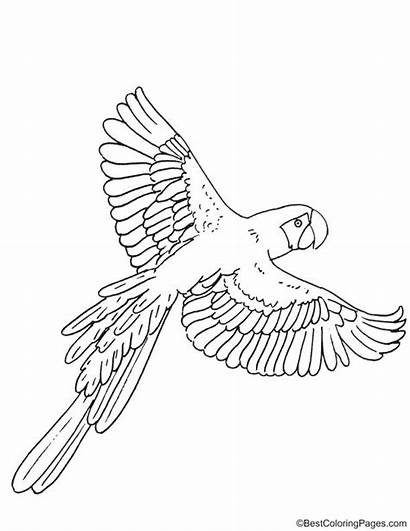 Coloring Macaw Bestcoloringpages
