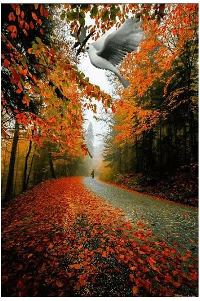 Autumn Nature Scenes Amazing Fall Landscape Google
