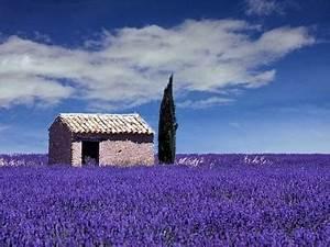 Prix De La Lavande : la provence de claire excursions en provence ~ Premium-room.com Idées de Décoration