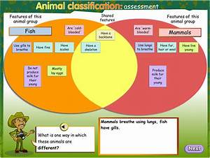 Animal Classification  Assessment  Teacher Guide