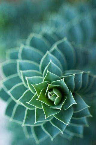 fractals  tumblr
