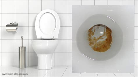 urine scale   toilet   remove limescale  toilets