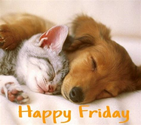 Happy Wallpaper Cats And Dogs by Friday Cat Sleeping And Happy Friday On