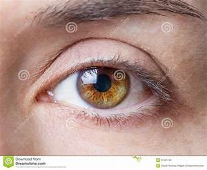 Closeup Of Female Natural Brown Eye Without Makeup Stock ...