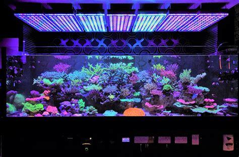 saltwater tank lights coral gallery reef aquarium led orphek aquarium