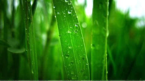Abstract Green Leaf Wallpaper by Green Leaves Live Wallpaper