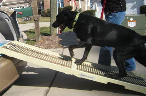 teach  senior dog    ramp  stairs  mikkel