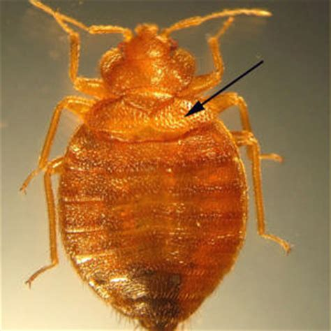 29 news bed bugs in christmas trees bedbugs they re on the increase and they want to feed on you what you can do about bed bugs
