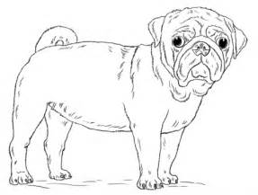 cute pug dog coloring page  printable coloring pages