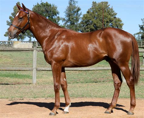 horse africa south horses know fin24 r1 million sold there