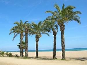 Bilder Von Palmen : palmen bilder fotos ~ Frokenaadalensverden.com Haus und Dekorationen