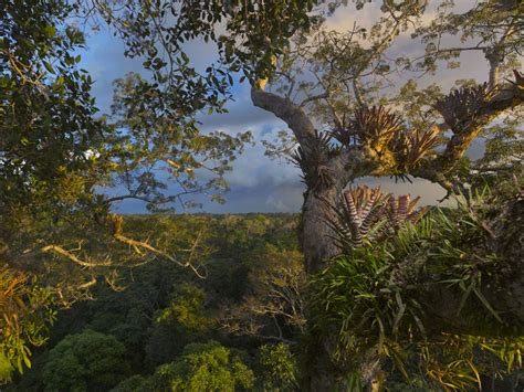 rain forest national geographic society