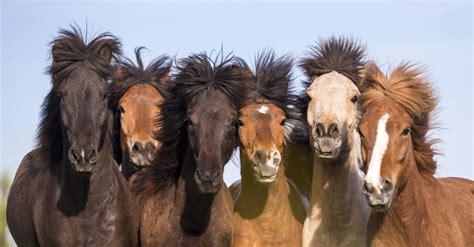 fotos pferden aus fohlen werden pferde mein pferd mein freund