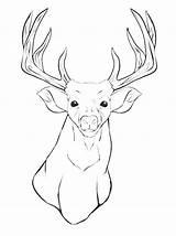 Deer Coloring Mule Buck Whitetail Doe Printable Animal Hunting Female Getcolorings Mushroom Head Pa sketch template
