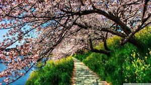 Spring, In, Japan, Wallpapers, Hd, Free, Download
