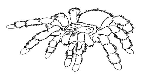 spider coloring pages 25 printable spider coloring pages print color craft