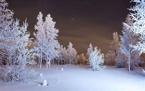 750x1334 beautiful snow green nature green ultra hd hd wallpapers trees hd