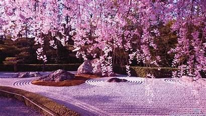 Sakura Flower Wallpapers Blossom Cherry Japan Lake