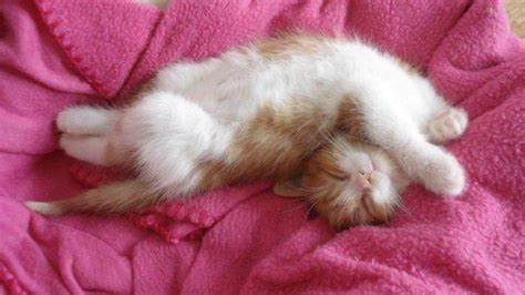 happy kitten wallpaper  background image