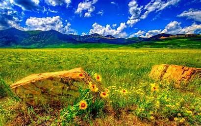 Sky Flowers Meadow Summer Mountain Nature Landscape