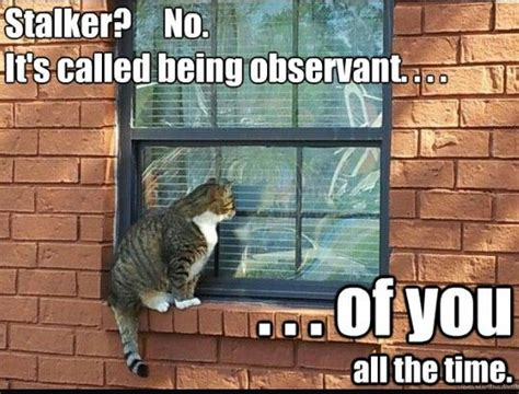 Funny Stalker Memes - 25 best ideas about stalker meme on pinterest in love meme gangsta meme and funny jokes with