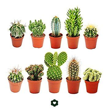 meaning  symbolism   word cactus