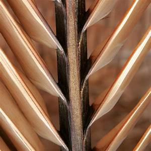 Hortensien Blätter Werden Braun Frost : bekommt ihre kokospalme braune bl tter daran kann 39 s liegen ~ Lizthompson.info Haus und Dekorationen