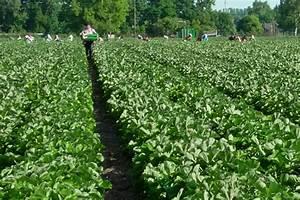 Mindestlohn Abrechnung : nachbesserung bei mindestlohnregelung f r die landwirtschaft gefordert landwirtschaft krefeld ~ Themetempest.com Abrechnung