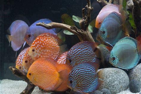 fische ins aquarium einsetzen fische sofort einsetzen starter bakterien und andere mittel aquaristik