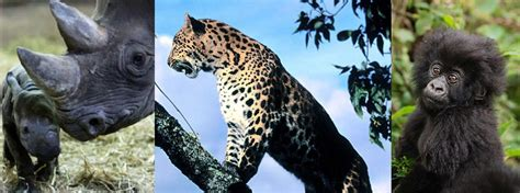 top   endangered species   world
