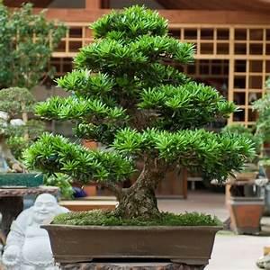 Bonsai Arten Für Anfänger : sortiment zulauf ag ~ Sanjose-hotels-ca.com Haus und Dekorationen