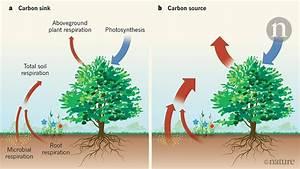 Hyperactive Soil Microbes Might Weaken The Terrestrial