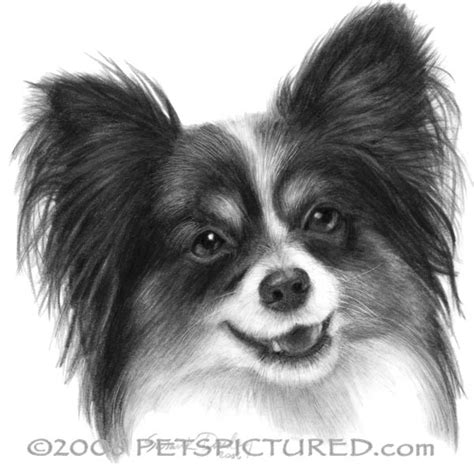 dog breed directory papillon dog breed