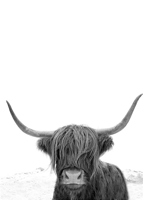 highland  art print highland  photography