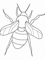 Insect Coloring Pages Fly Insects Island Pest Control Abc sketch template