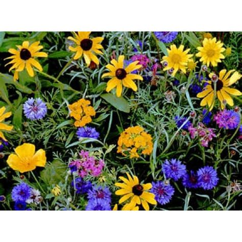 buy wildflower seeds mountain