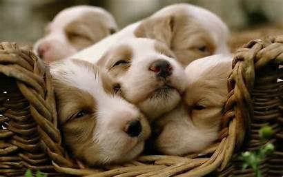 Puppy Desktop Wallpapers Galaxy Samsung