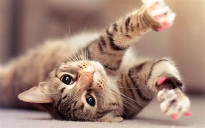 Cats Wallpapers Cat Laptop Desktop 1080p Wallpapertag