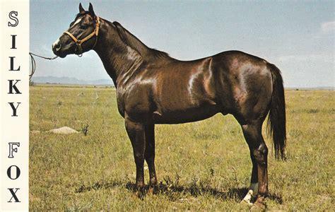 quarter horse fox aqha champion silky horses champions weebly custom futurity sired winners