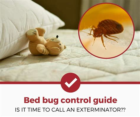 Bed Bug Exterminator Prices by How Much Do Bed Bug Exterminators Cost A Simple Guide