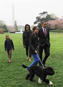 Photos of Barack Obama's Dog Bo | POPSUGAR Pets
