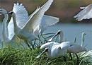 探訪台江 第一座地方催生的國家公園黑面琵鷺的最愛