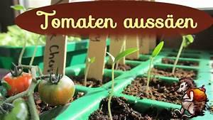 Aprikosenbaum Selber Ziehen : tomaten auss en tomaten vorziehen anzucht mit tomatensamen youtube ~ A.2002-acura-tl-radio.info Haus und Dekorationen