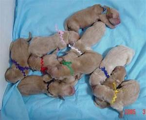 13 best images about Baby puppy's on Pinterest | Lab ...