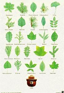 Just This Picture Leaf Identification Post From Smoky Bear