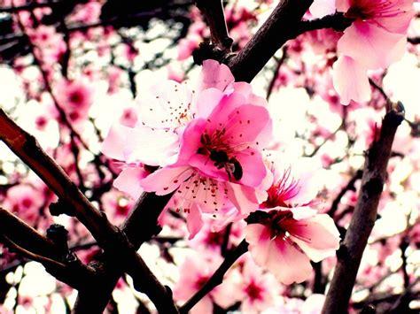 sognare fiori significato significato fiori di pesco significato fiori
