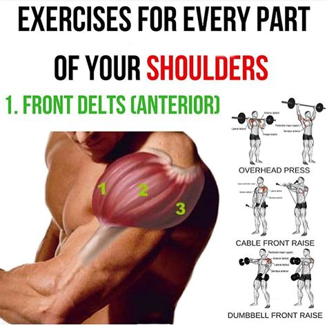 Gym equipment pictures & explanations. Pin by Dale Coitrone on arms | Shoulder workout, Exercise