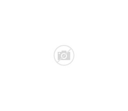 Svg Kidney Kidneys Clipart Noun Cc Orange