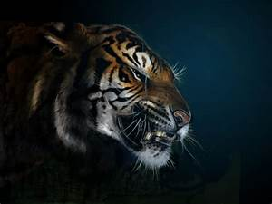 Angry Tiger Hd Wallpapers 1920x1080 | www.imgkid.com - The ...