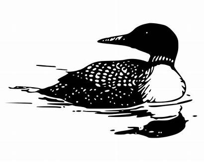 Loon Common Clipart Silhouette Clip Bird Svg